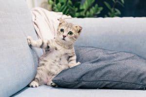 canape et tissu et chat
